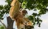 African Bird Handling Experience