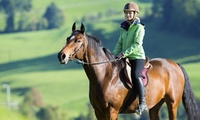 One or Three Horse Riding Lessons from Fitzworthy Equestrian Centre (44% Off)