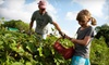 Green Gate Farms - Austin: Four-Hour Farm-Camp Session for Child or Adult at Green Gate Farms (51% Off)