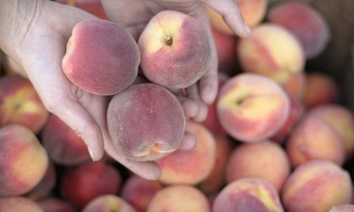 Dublin Farmers' Market - Dublin: $5 for $10 Worth of Local Produce and Gifts at Dublin Farmers' Market