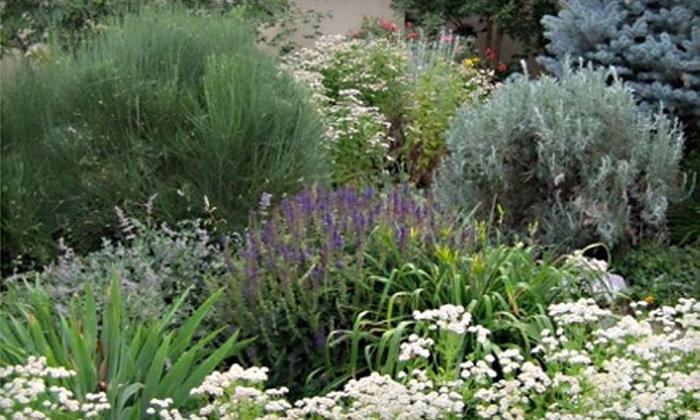Silver Sage Garden Centers - Littleton: $15 for $30 Worth of Trees, Flowers, and Shrubs at Silver Sage Garden Centers in Littleton