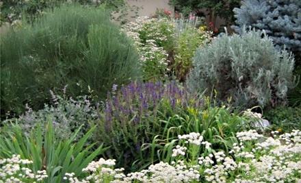 $30 Groupon to Silver Sage Garden Centers - Silver Sage Garden Centers in Littleton