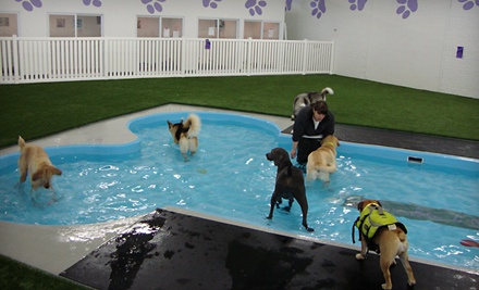 Paradise 4 Paws: Dog Boarding, Pawdicure, and More - Paradise 4 Paws in Schiller Park