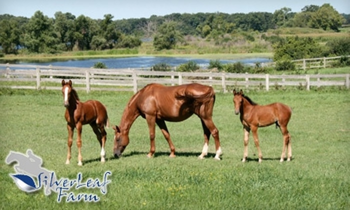 SilverLeaf Farm - Walworth: $48 for Two Private Horseback-Riding Lessons at SilverLeaf Farm in Walworth ($130 Value)