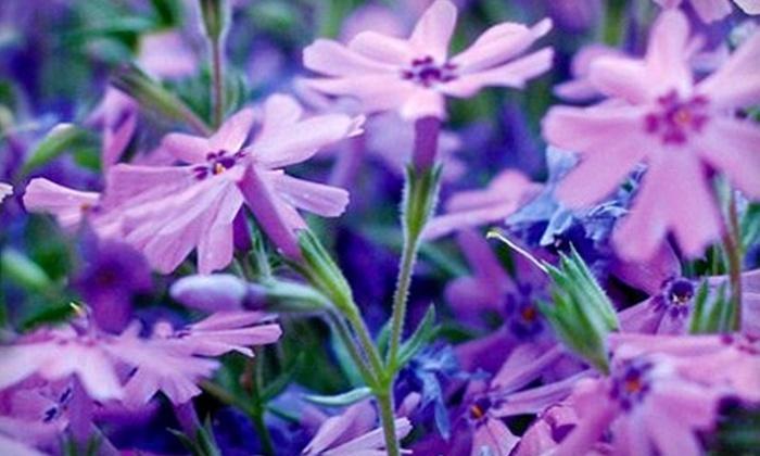 Plant & Garden World - East Hartford: $15 for $30 Worth of Flowers and Garden Plants at Plant & Garden World in East Hartford