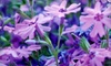 Plant & Garden World - East Hartford: $15 for $30 Worth of Flowers and Garden Plants at Plant & Garden World in East Hartford
