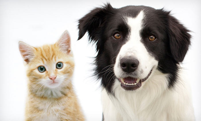 Pet Vet Animal Hospital - Hockaday: Feline or Canine Exam and Health Plan or Microchip for One or Two Pets at Pet Vet Animal Hospital (Up to 60% Off)