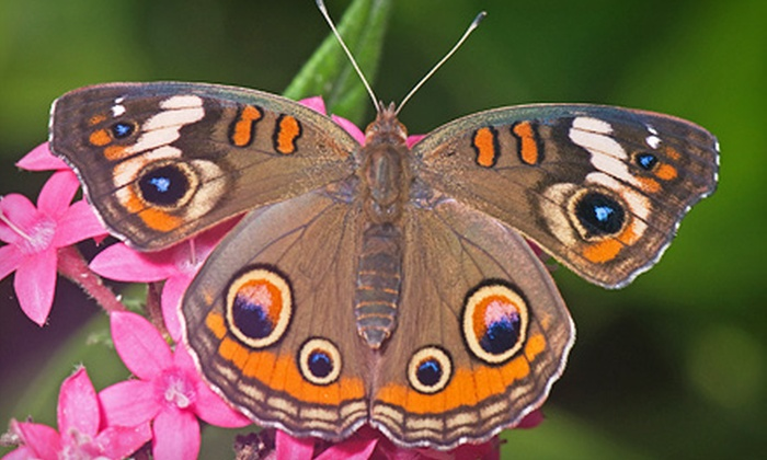 The Butterfly Place - Westford: $12 for Two Admissions to The Butterfly Place in Westford (Up to $24 Value)