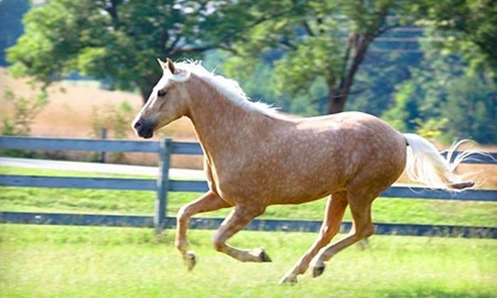 Morgan View Farm - Macon: Horseback-Riding Lessons at Morgan View Farm. Choose Between Two Options.