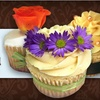 Half Off at Cupcakes Nouveau in Coral Gables
