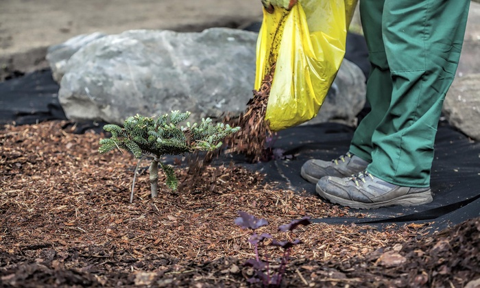 Califia Eco Designs - Orange County: $69 for $125 Worth of Landscaping — Califia ECOdesigns
