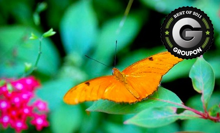 1 Annual Adult Membership (a $24 value) - The Butterfly Estates in Fort Myers