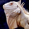 Up to 53% Off Reptile Zoo Outing in Gurnee