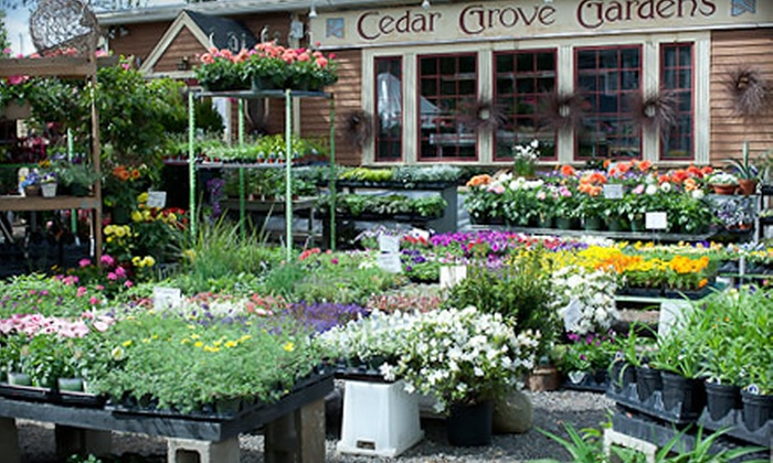 Cedar Grove Gardens - Dorchester: $20 for $40 Worth of Plants, Flowers, and Gifts at Cedar Grove Gardens