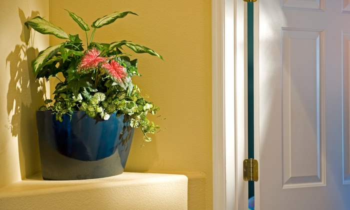 Perfect Fit Planter - Florida Center: $14 for $25 Worth of Plants — Perfect Fit Planter