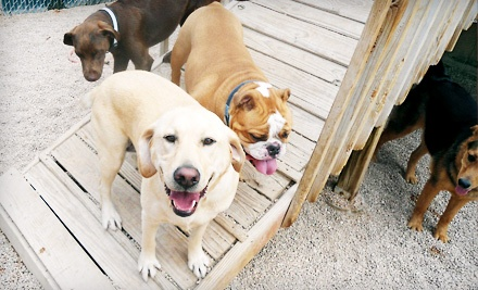 Two-Day, One-Night Dog-Boarding Stay and Bath (a $60 value) - Camp Bow Wow in Tampa
