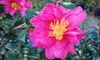 Space Coast Bamboo - Sharpes: Plants and Flowers or Intro Bamboo-Growing Class at Space Coast Bamboo in Cocoa Beach (Up to 53% Off)