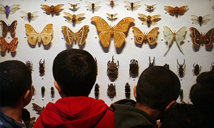 Staten Island Museum - Staten Island: $17 for an Individual Membership ($35 Value) or $25 for a Family or Dual Membership ($50 Value) to the Staten Island Museum