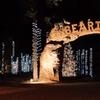 Half Off Zoo Lights Admission