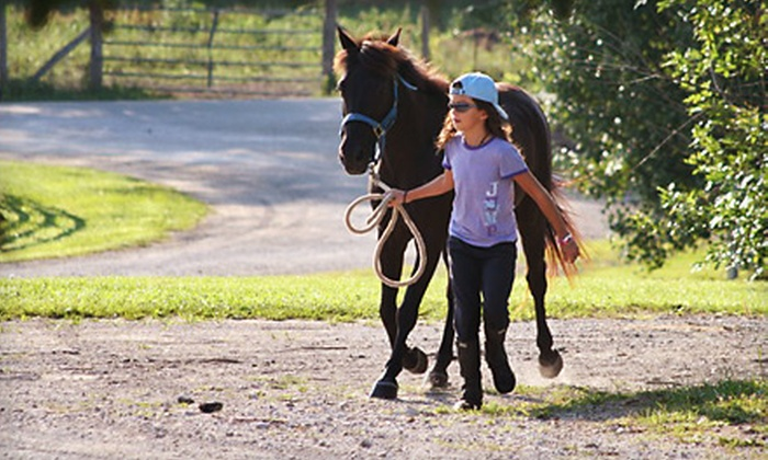 Mechlin Farms - Wright City: One-Hour Individual or Four-Person Horseback-Riding Lessons at Mechlin Farm in Wright City.
