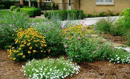 Happy Gardens - Happy Gardens in