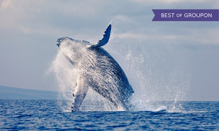 3.5-Hour Whale-Watching Cruise for One, Two, or Four from Flagship Cruises and Events (Up to 47% Off)
