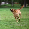 Up to 48% Off Doggy Daycare at Paradise Pets