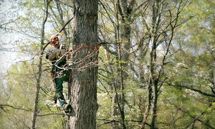 Frank & Son Tree and Landscaping - Chapel Hill: $99 for $300 Worth of Safety Pruning and Tree Cleanup from Frank & Son Tree and Landscaping