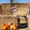 Half Off Harvest-Festival Outings in Monmouth