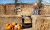 Airlie Hills Harvest Festival and Pumpkin Patch - Monmouth: Weekday or Weekend Airlie Hills Harvest Festival & Pumpkin Patch Outing for Two or Four in Monmouth