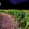 Up to 53% Off Admission to Haunted Corn Maze