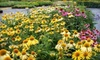 Morningwood Farm Nursery  - Mount Horeb: $25 for $50 Worth of Plants, Trees, and Landscaping Services at Morningwood Farm Nursery in Mount Horeb