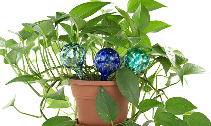 Hand-Blown Glass Aqua Globes for Houseplants: Hand-Blown Glass Aqua Globes for Houseplants. Multiple Options Available. Free Returns.