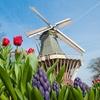 Holandia: wycieczka z paradą kwiatów
