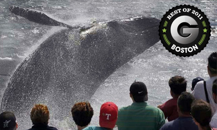 A Cape Ann Whale Watch - Gloucester: $29 for a Whale-Watching Cruise from A Cape Ann Whale Watch in Gloucester ($48 Value)