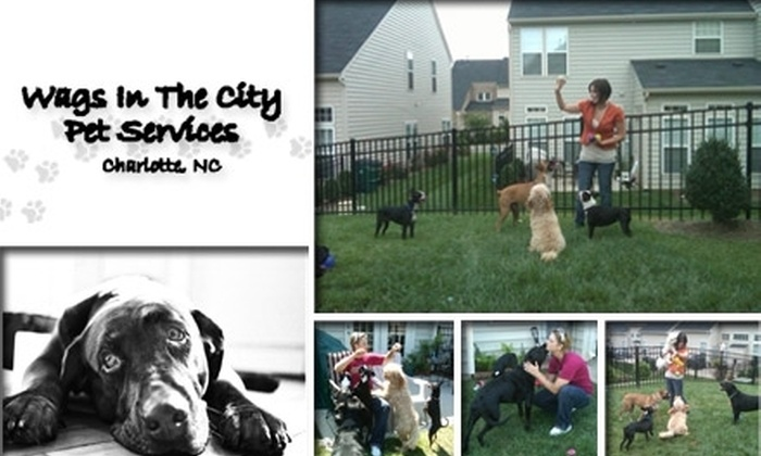 Wags In The City  - Charlotte: $10 for $50 Worth of Pet Services from Wags In The City