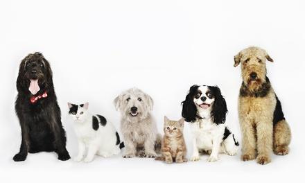 Limpieza bucal para perro o para gato desde 69 € en Mendebaldea Dogos