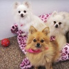 Up to 55% Off Dog Grooming in Lake Elsinore