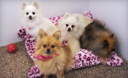 Grooming for 1 Small or Medium-Sized Dog (a $38 value) - Scrubs Pet Care in Lake Elsinore