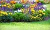 Kingston Nurseries - Harrowsmith: Kingston NurseriesShrubs, Perennials, and Trees at Kingston Nurseries (Half Off)