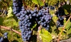 Asheville Beverage & Event Supply - Historic Montford: Wine Tasting for Two or Four at Asheville Beverage & Event Supply (Up to 53% Off)