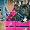 Up to Half Off at Northwest Pet and Companion Fair