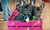 Northwest Pet and Companion Fair - Portland: Northwest Pet and Companion Fair for Two or Up to Five People on May 5 and 6 (Half Off)