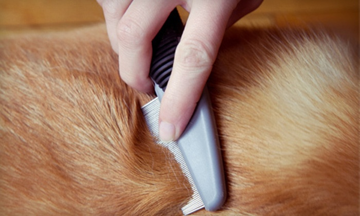 Love on a Leash - Southide Estates: Two Grooming Sessions for a Small, Medium, or Large Dog at Love on a Leash (Up to 58% Off)