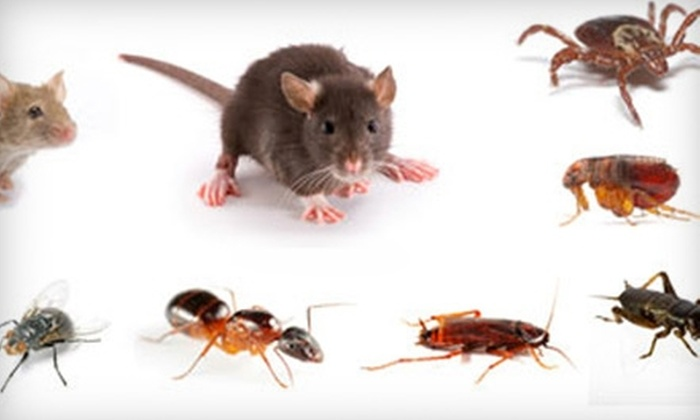 Bug Express Pest Control - San Angelo: $59 for One-Time Inside Spray and Granular Perimeter Treatment with 30-Day Guarantee from Bug Express Pest Control ($130 Value)
