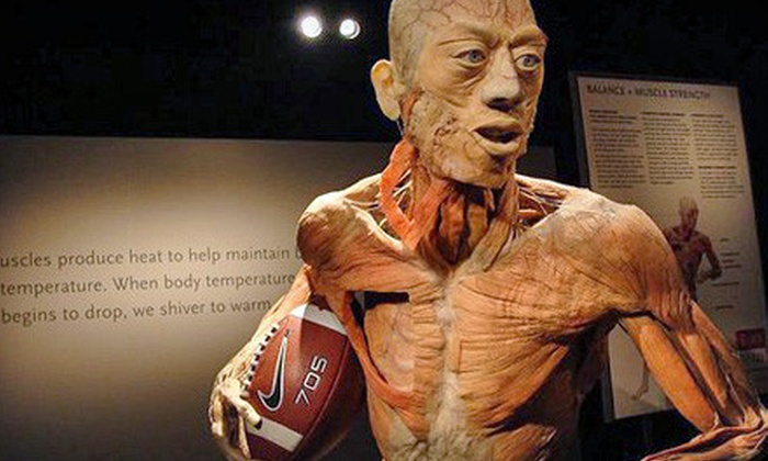 "Bodies...The Exhibition - Atlantic Station: Admission to ""Bodies…The Exhibition"" and ""Dialog in the Dark"" at Atlantic Station. Four Options Available."