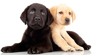 Dogs 24/7: Five Days of Daycare, Five Nights of Boarding, or $25 for $50 Toward Grooming at Dogs 24/7