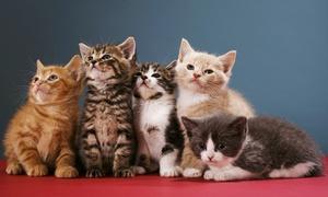 L'Arche Féline: Entrées pour 2, 4 ou 6 personnes au parc consacré aux chats de race l'Arche Féline dès 4,50 €
