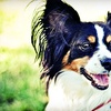 Up to 52% Off Dog Boarding or Daycare