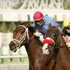 Half Off Horseracing Outing at Turf Paradise